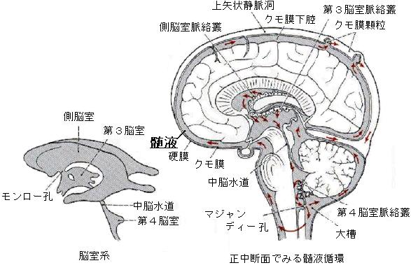 cerebral9